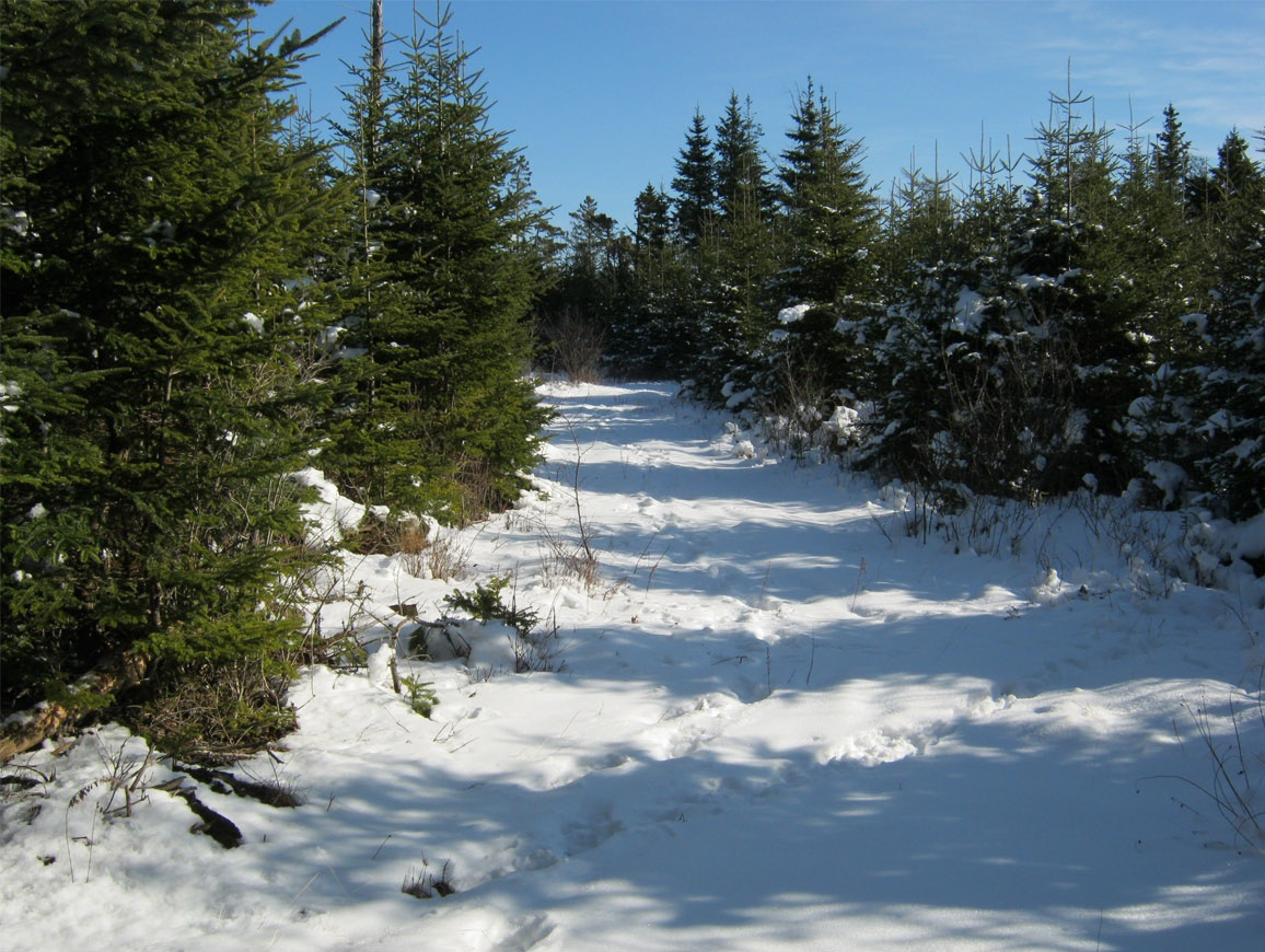 Sherose Island Nature Trail
