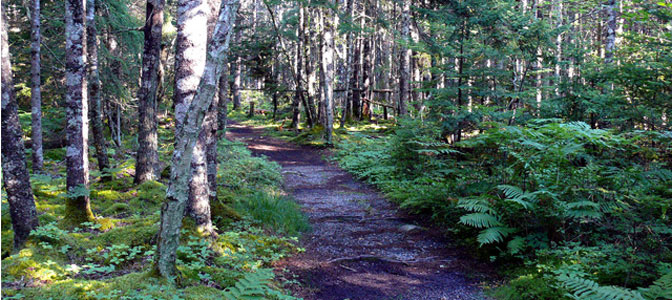 Chebogue Meadows Interpretive Trail