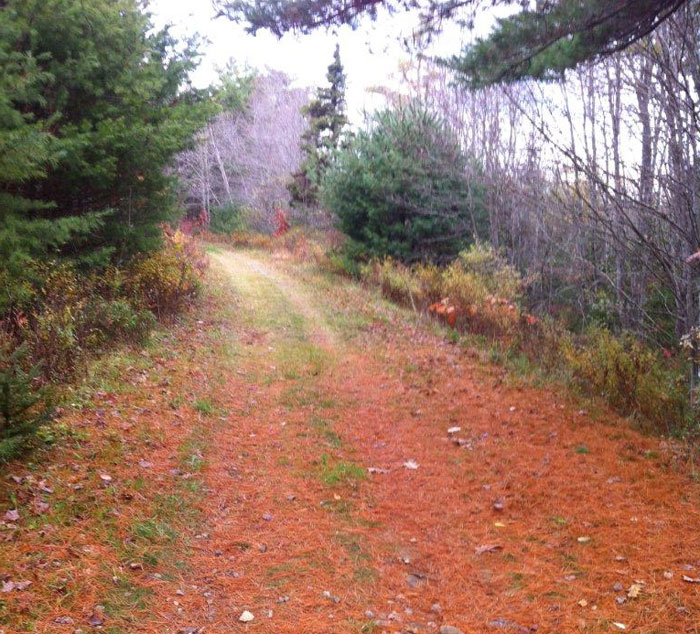 Summerville Walk Trail